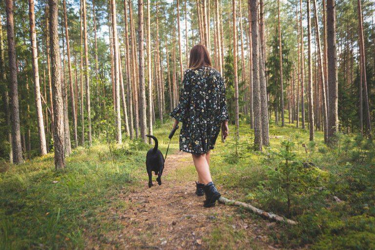Gdzie pójść na spacer z psem w mieście?
